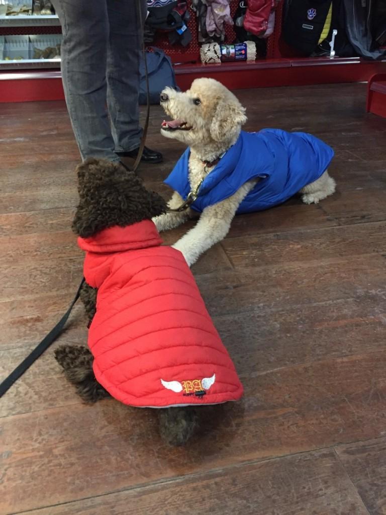 manteaux d'hiver pour chiens