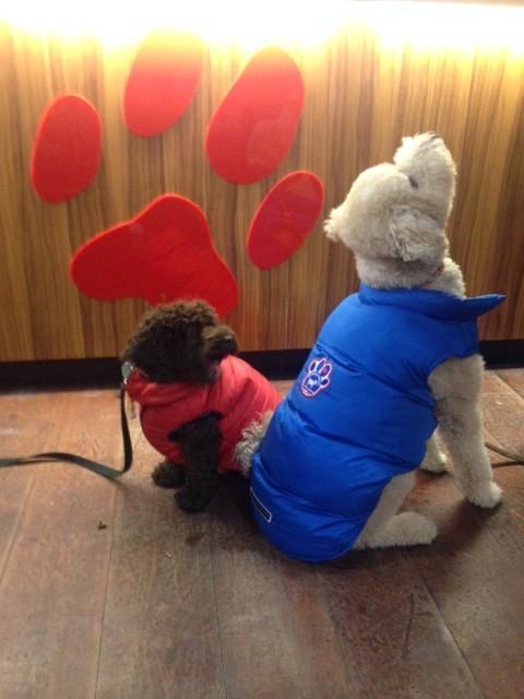 manteaux d'hiver pour chien