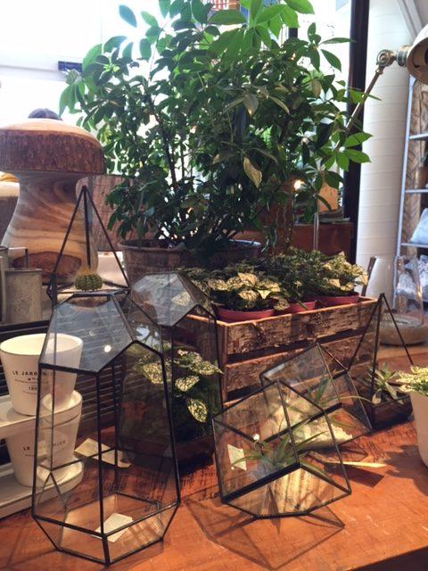 Terrariums prix et formes variés